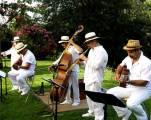 musiciens-vin-d-honneur